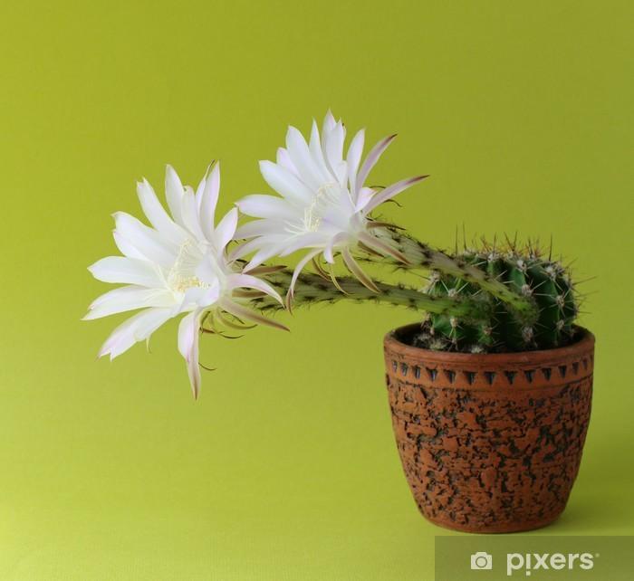 Papier peint vinyle Floraison hybride de cactus - Fleurs