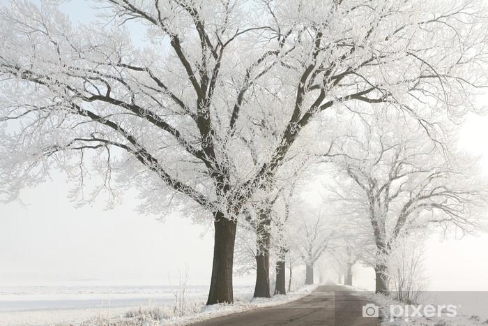 Pixerstick Sticker Winter lane onder de majestueuze oude eiken bomen bedekt met vorst - Platteland