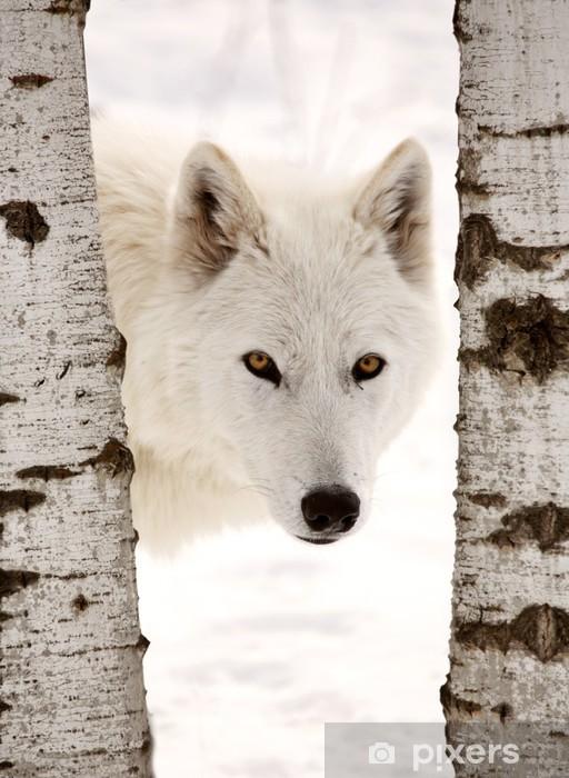 Papier peint vinyle Loup arctique observée entre deux arbres en hiver -