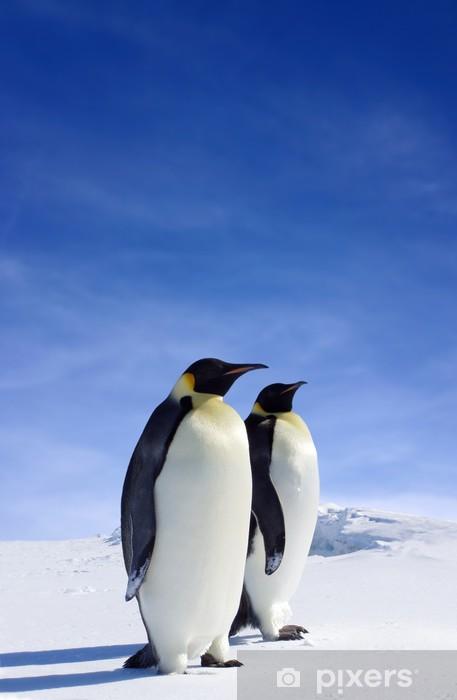 Sticker Pixerstick La faune antarctique - Oiseaux