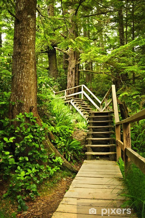 Path in temperate rainforest Vinyl Wall Mural - Themes