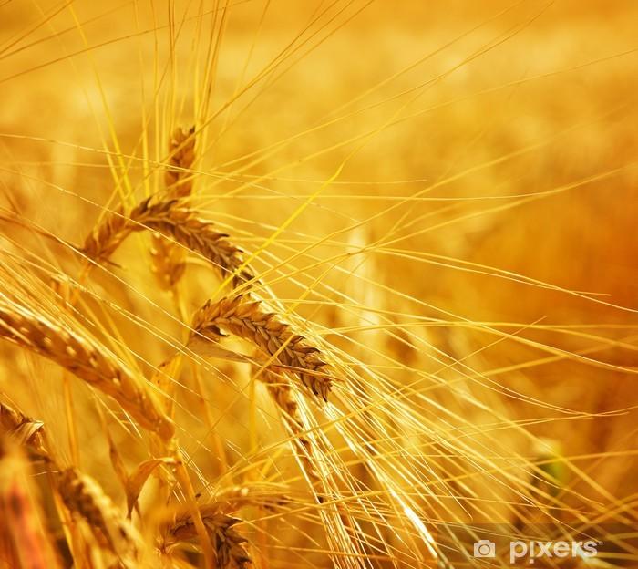 Fototapeta winylowa Pole zbóż pszenicy, rolnictwo - Rolnictwo