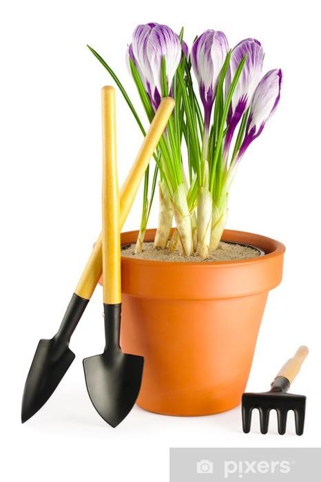 Papier Peint Floraison Des Crocus Violets En Terre Cuite Pot De