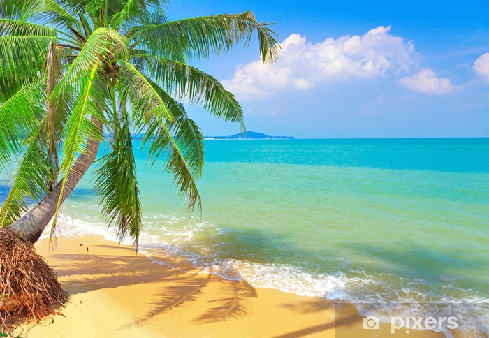 Fototapeta winylowa Tropikalna plaża z palmy kokosowej - Natura