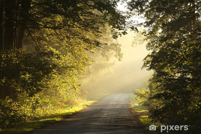 Fototapeta zmywalna Wiejska dróżka w lesie jesienią w mglisty poranek - Tematy