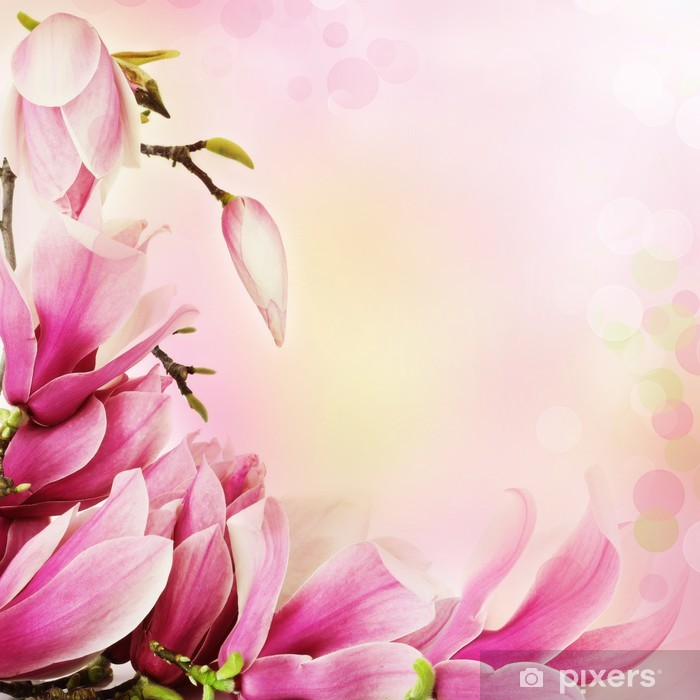 Spring Magnolia Flowers Border Sticker Pixers We Live To Change