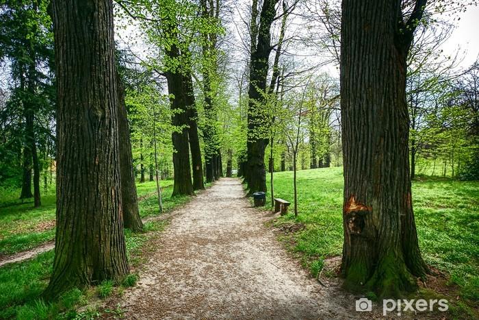 Vinyl Fotobehang Steegje in groen park - Thema's