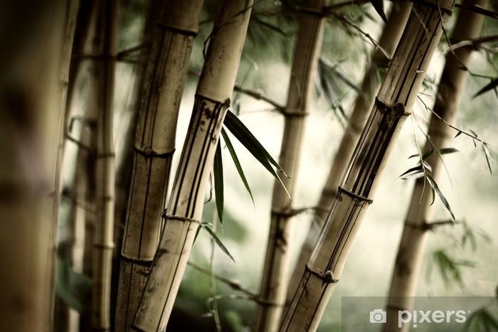 Fotomural Estándar Bamboo forest background - Temas