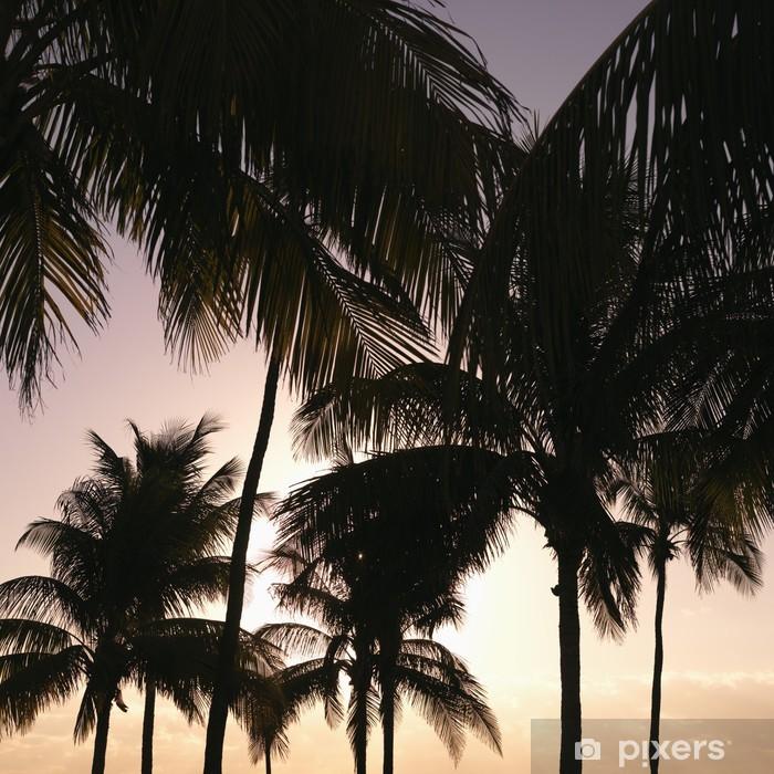 Fototapeta winylowa Palmy o zachodzie słońca w Miami, Floryda, USA. - Palmy