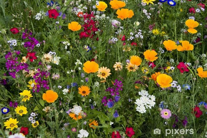Fototapeta Letnia łąka 5 • Pixers® - Żyjemy by zmieniać