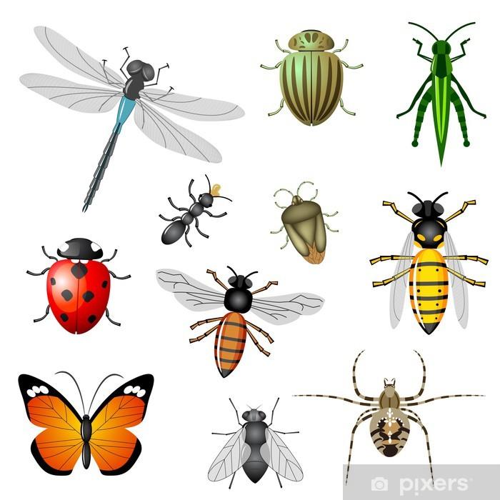 fototapete insekten oder ungeziefer vektorsammlung