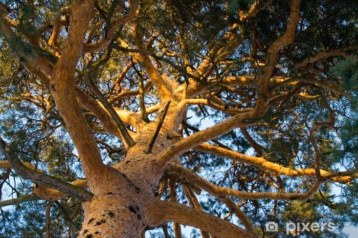 tree Pixerstick Sticker - Trees