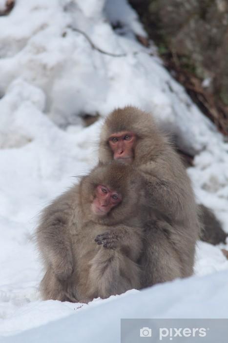 Vinilo Pixerstick Mono de la nieve - Mamíferos