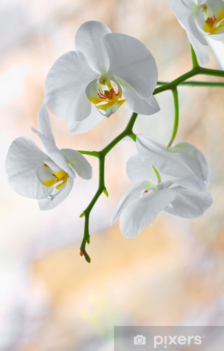 Sticker Pixerstick Orchidée - Thèmes
