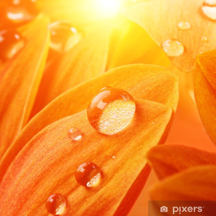 Orange flower petals with water drops on it Poster - Flowers