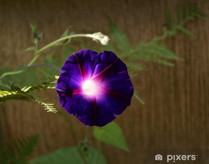 Naklejka Pixerstick Deep Purple powój - Dom i ogród