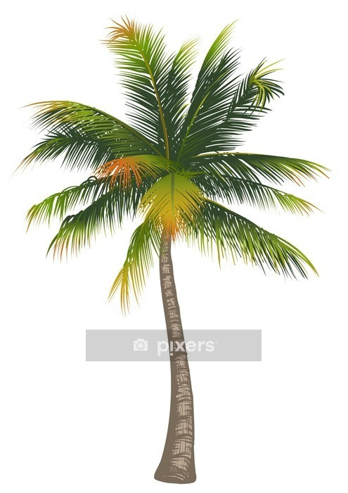 Coconut palm tree on a white background Wall Decal -