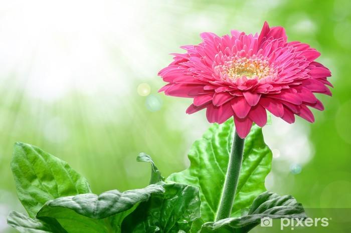 Papier peint vinyle Gerbera - Fleurs