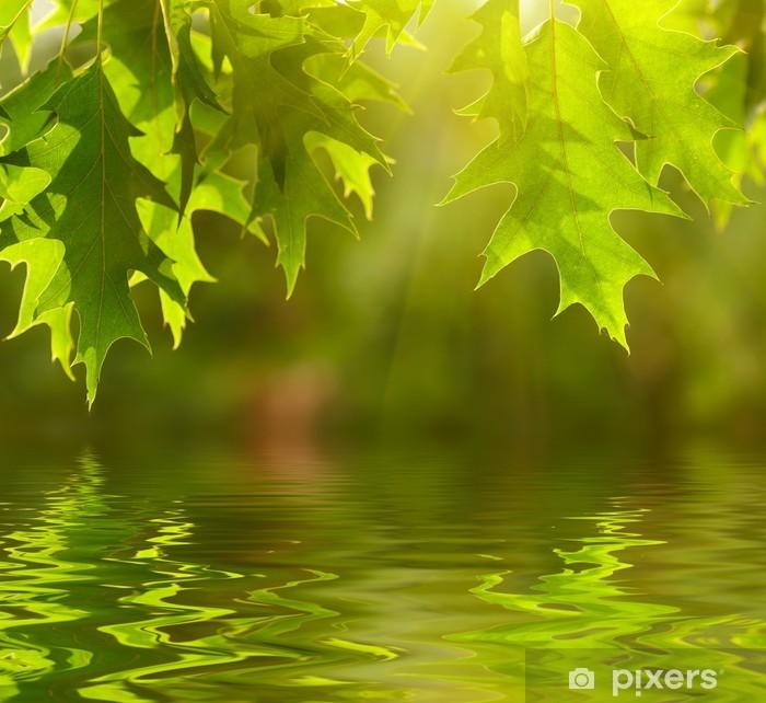 Poster Feuilles vertes reflétant dans l'eau - Thèmes