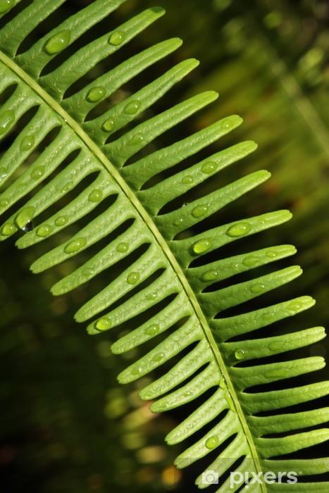 Naklejka Pixerstick Liść paproci, Tekstura paproci drzewa z kroplą rosy - Rośliny