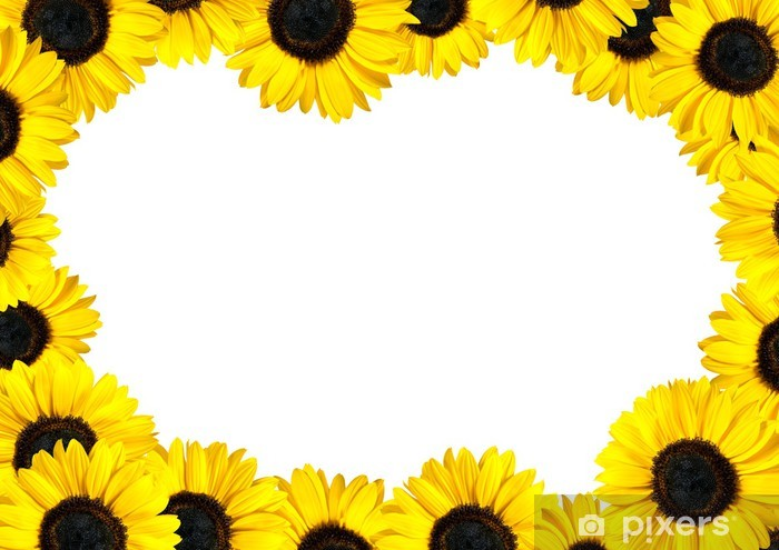 Fresh Sunflower Frame With White Background Wall Mural