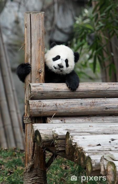 Fototapeta winylowa Panda - Tematy