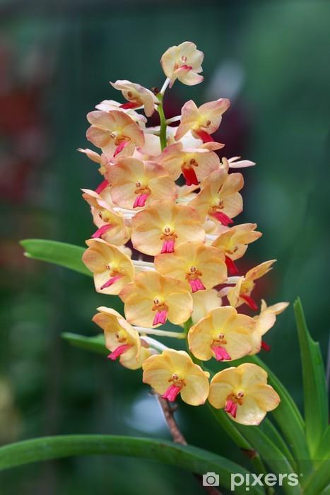 Sticker Pixerstick Un groupe d'orchidées oranges - Fleurs