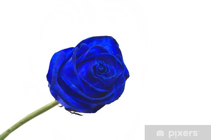 Blue Rose Rosa Blu Wall Mural Vinyl
