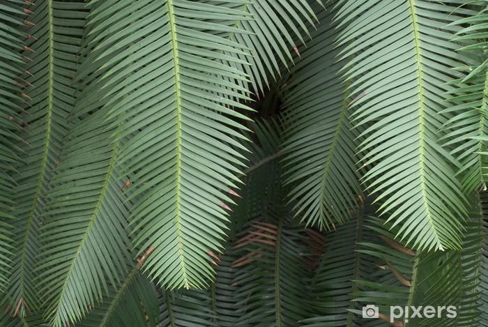 Fotomural Estándar Estudio de helechos con el fondo oscuro - Plantas