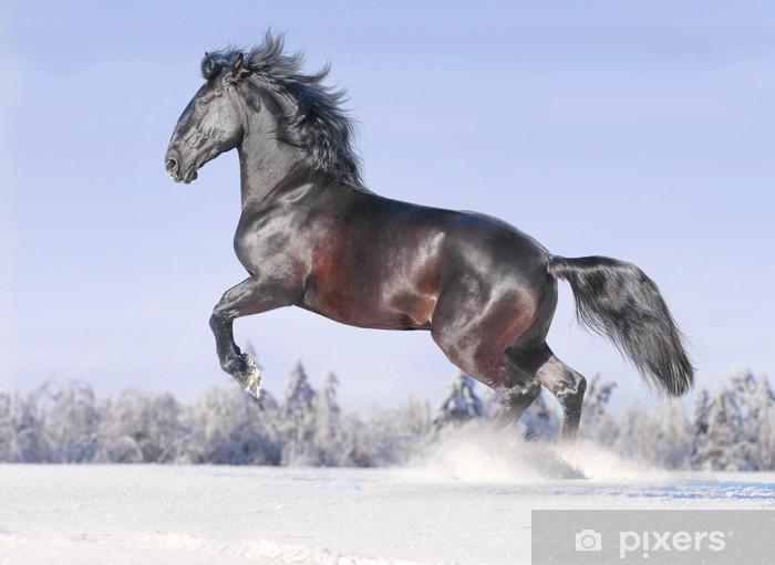 Fototapeta winylowa Kladrub wolnego konia w zimie - Ssaki