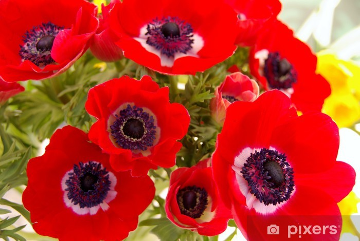 A bunch of red anemone flowers Vinyl Wall Mural - Flowers