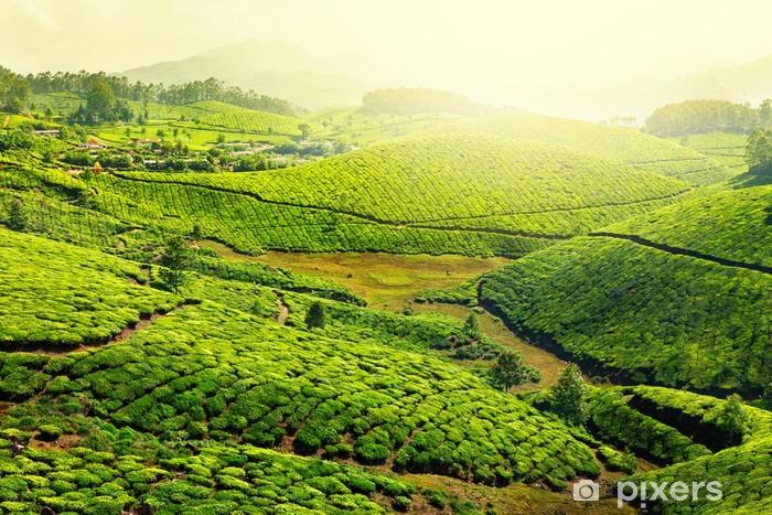 Tea plantations Vinyl Wall Mural - Mountains