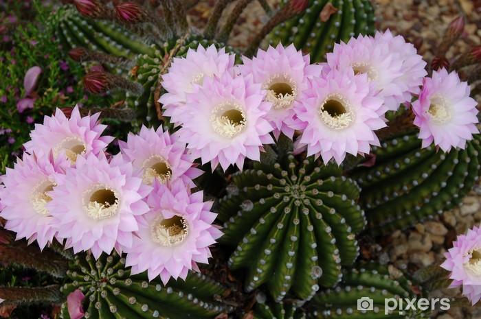 Naklejka Pixerstick Różowy kaktus kwiaty - Kwiaty