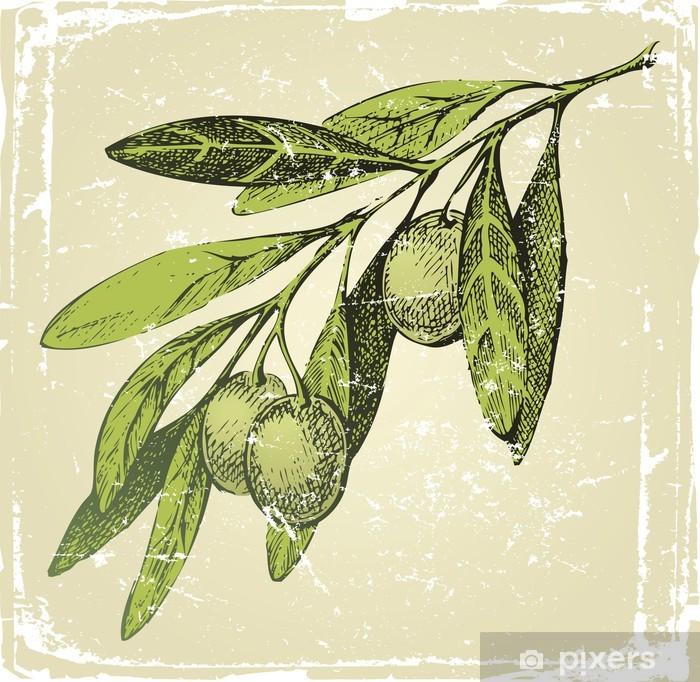 Papier peint vinyle Tiré par la main rameau d'olivier - Epices, herbes et condiments