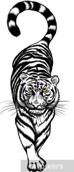 Black And White Crouching Tiger With Yellow Eyes Wall Mural Pixers We Live To Change