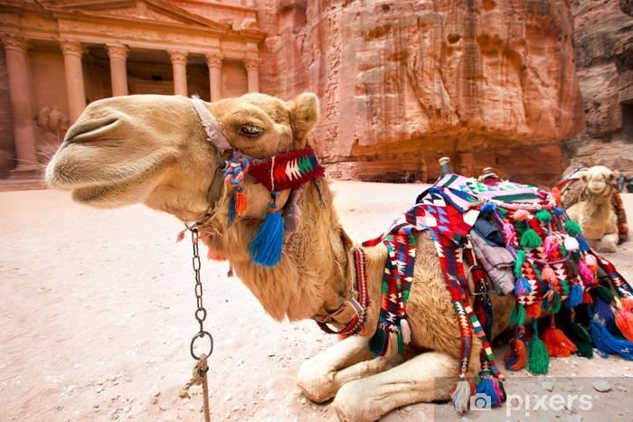 Fototapeta winylowa Bedouin wielbłąd spoczywa w pobliżu Al Khazneh w Petra, Jordania - Ssaki