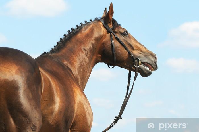 Naklejka Pixerstick Kasztan Don ogier portret konia - Sporty indywidualne