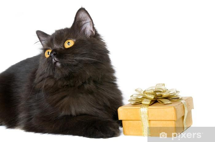 Fototapeta Czarny Kot Perski Pixers żyjemy By Zmieniać