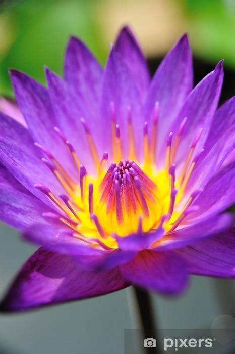 Nálepka Pixerstick Krásný květ lotus - Květiny