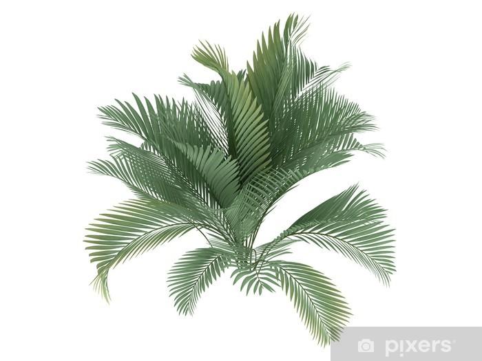 Naklejka Pixerstick Cat Palm (Chamaedorea cataractum) - Naklejki na ścianę