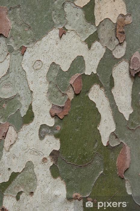 Papier peint vinyle Camouflage comme l'écorce de platane arbre (sycomore) - Arbres