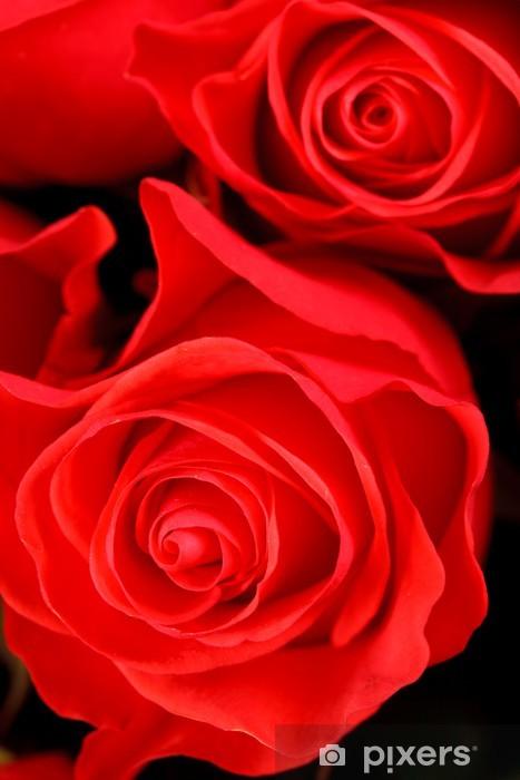beautiful roses Pixerstick Sticker - Flowers