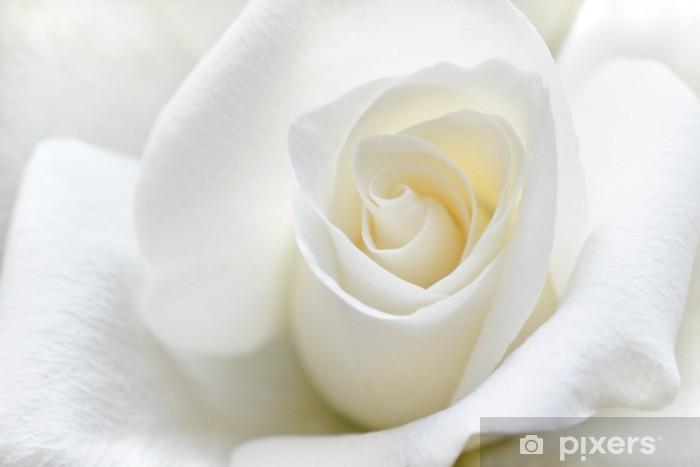 Fototapeta winylowa Miękka biała róża - Tematy