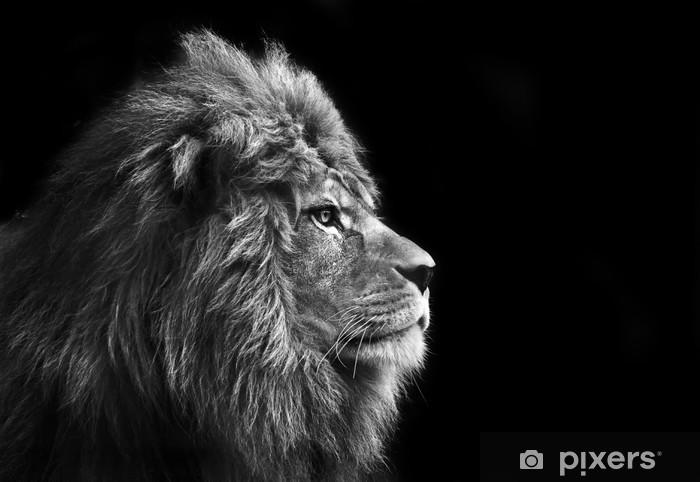Dolap Çıkartması Bla siyah arka plan üzerinde erkek aslan çarpıcı yüz portre -