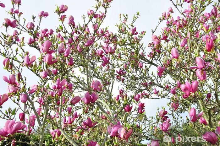 Naklejka Pixerstick Magnolia - Pory roku