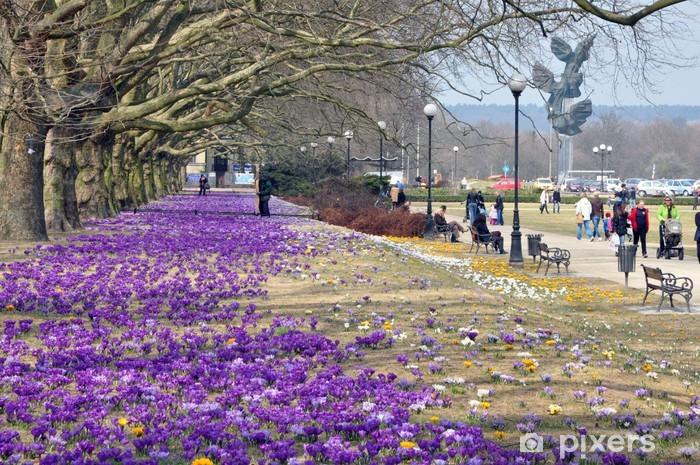 Fototapeta winylowa Wiosna w Szczecinie - Tematy