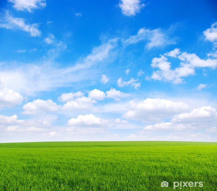 Plakat Pole - Krajobraz wiejski