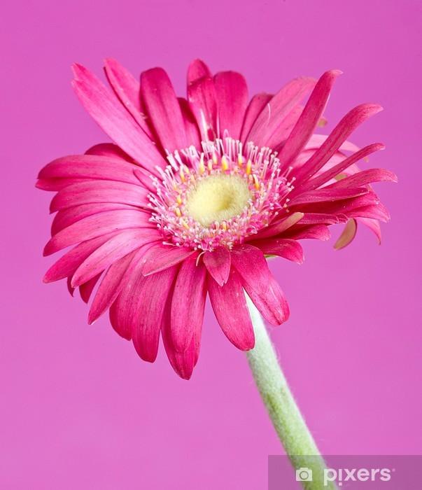Vinyl-Fototapete Bunten Germini Blume - Blumen