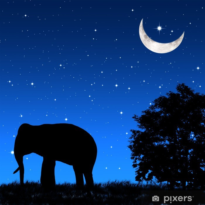 Vinyl-Fototapete Schatten-Elefant heikel in der Nacht - Frieden