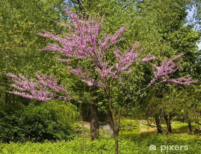 Naklejka Pixerstick Japoński wiśniowe drzewo w kwiecie - Pory roku